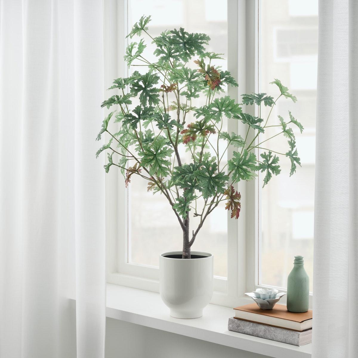 Letakkan jenis tanaman tinggi di ruang tamu mini