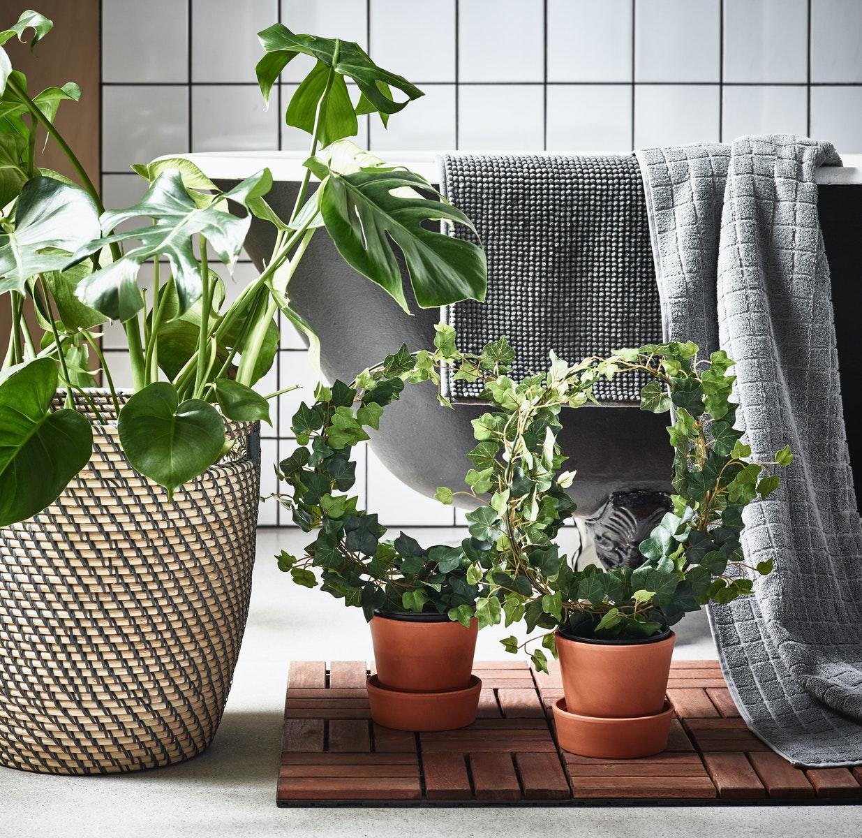 Gunakan tanaman untuk ciptakan atmosfer kamar mandi yang segar
